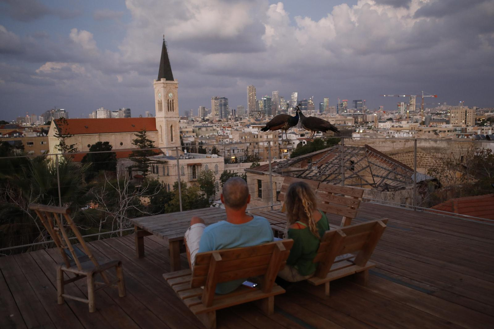 Arieh and Orna Ramot (L-R) watch peacocks on their rooftop, that often find their way to their house after their neighbour feeds them, November 20, 2017, Yafo, Tel Aviv, Israel.