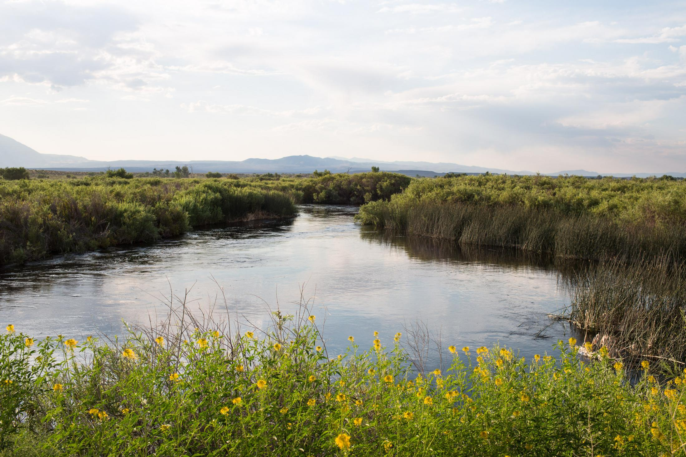 14. The Owens river. June 2017