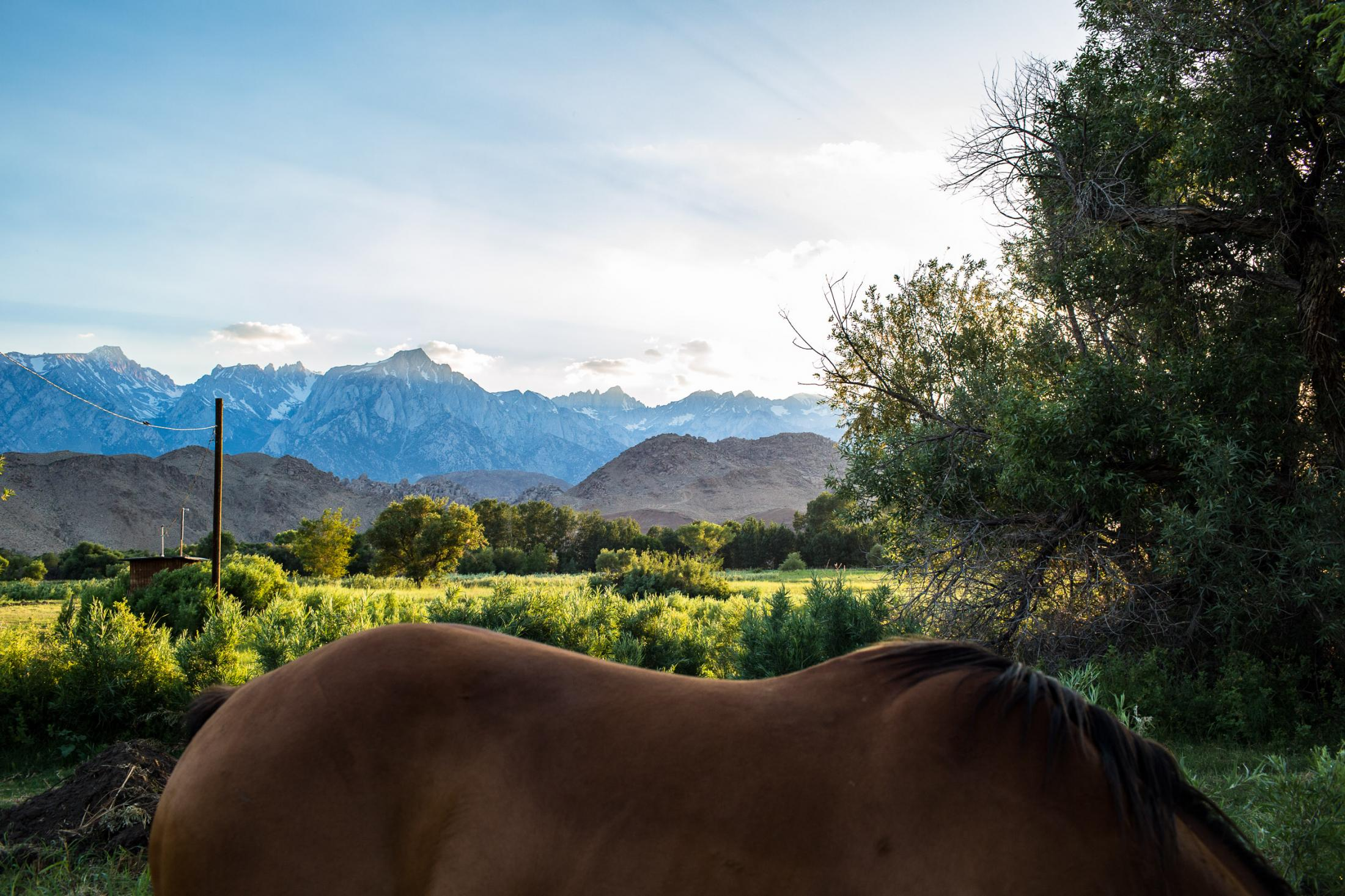 11. Horse back and Mt, Whitney in the background. -June 2018