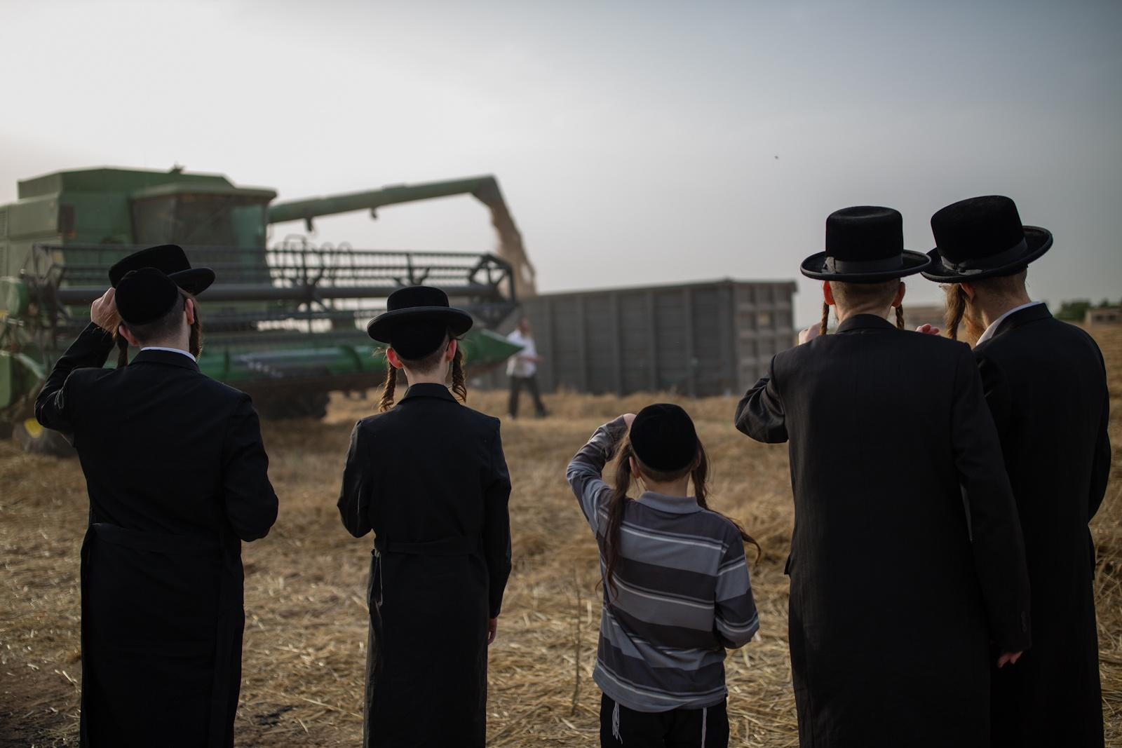 KOMEMIYUT, ISRAEL - MAY 03, 2016: Ultra-Orthodox Jews watch a harvester in a field in the Ultra-orthodox moshav of Komemiyut, May 3, 2016. According to a Jewish tradition the harvested wheat will be stored for almost a year and then used to grind flour to make unleavened bread for the week-long Passover holiday.