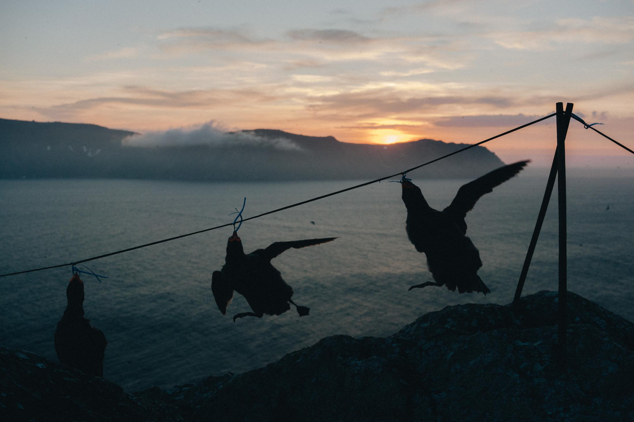 Little Diomede is one of the few places where people (natives only) are allowed to hunt using live decoys. Here, Ed Soolok ties an auklet to the decoy line by it's peak. This lures other birds to the area.