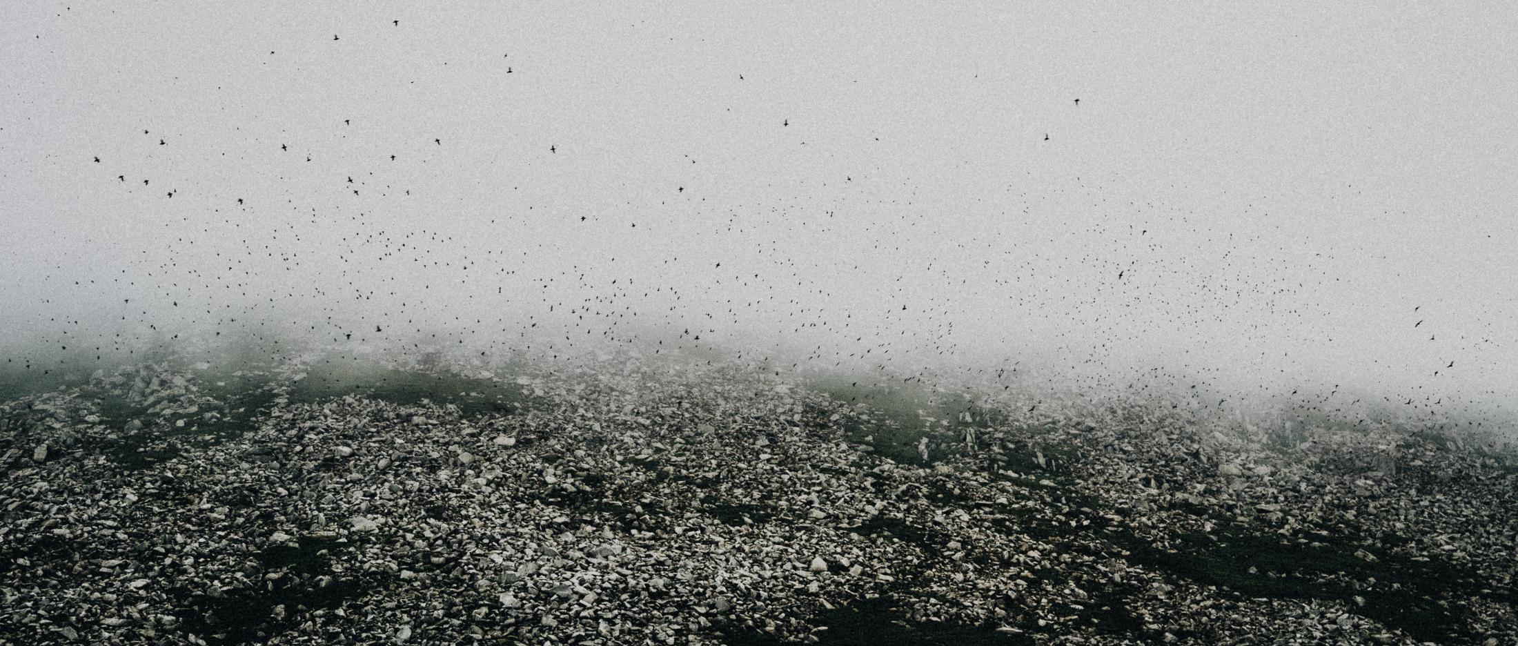 Birds in summer darken the Diomede's skies.