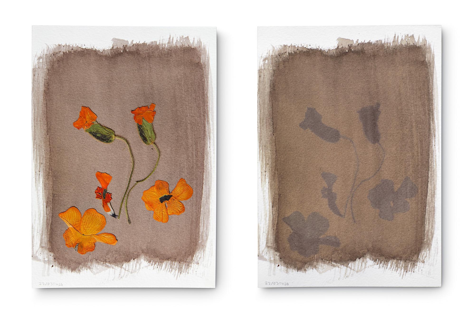 Thunbergia alata, Ojitos negros u Ojo de Poeta. (Nativa de África) 6 días de exposición. Las flores son de un color naranja fuerte pero el tinte es grisáceo. Crece como maleza, es invasora. Se la usa para curar el mal de ojo, mal aire o sustos.