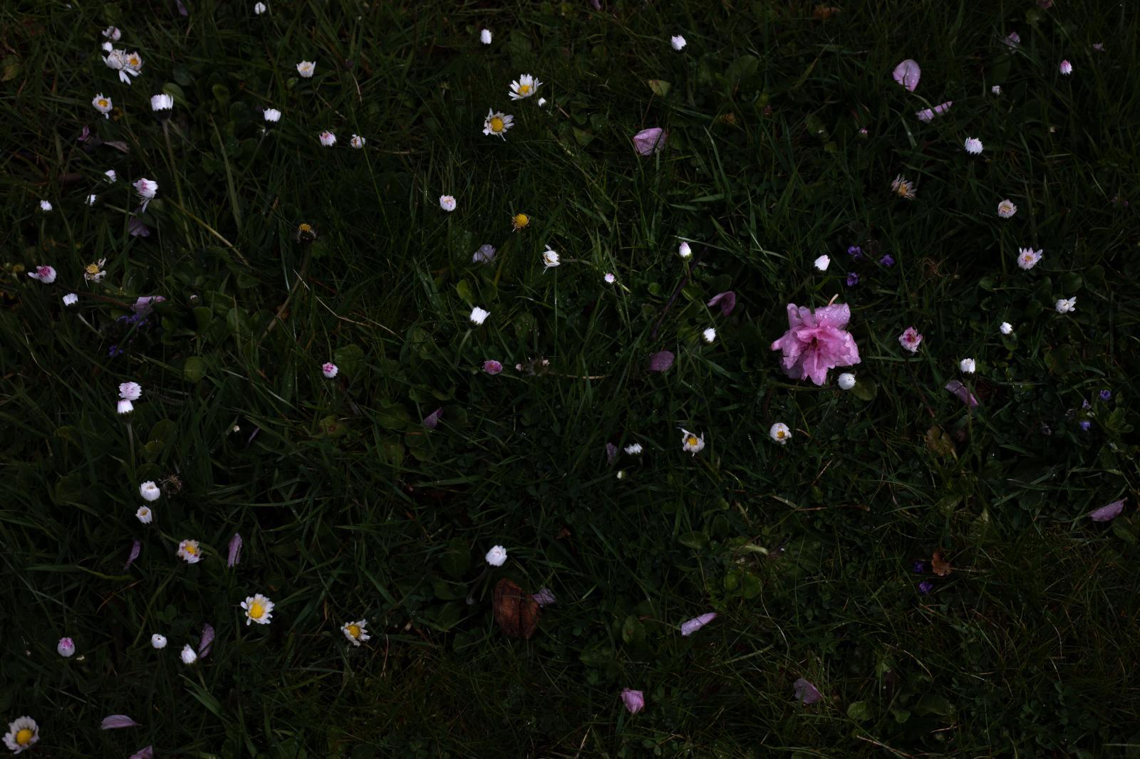 Photography image - Loading STischendorf_In_Quarantine_Alone_Day2.jpg
