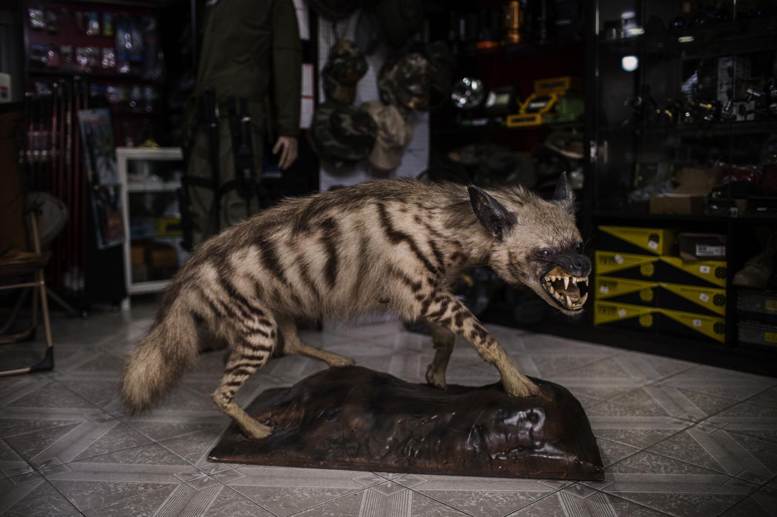 Photography image - Loading Hyena-NYT-01.jpg