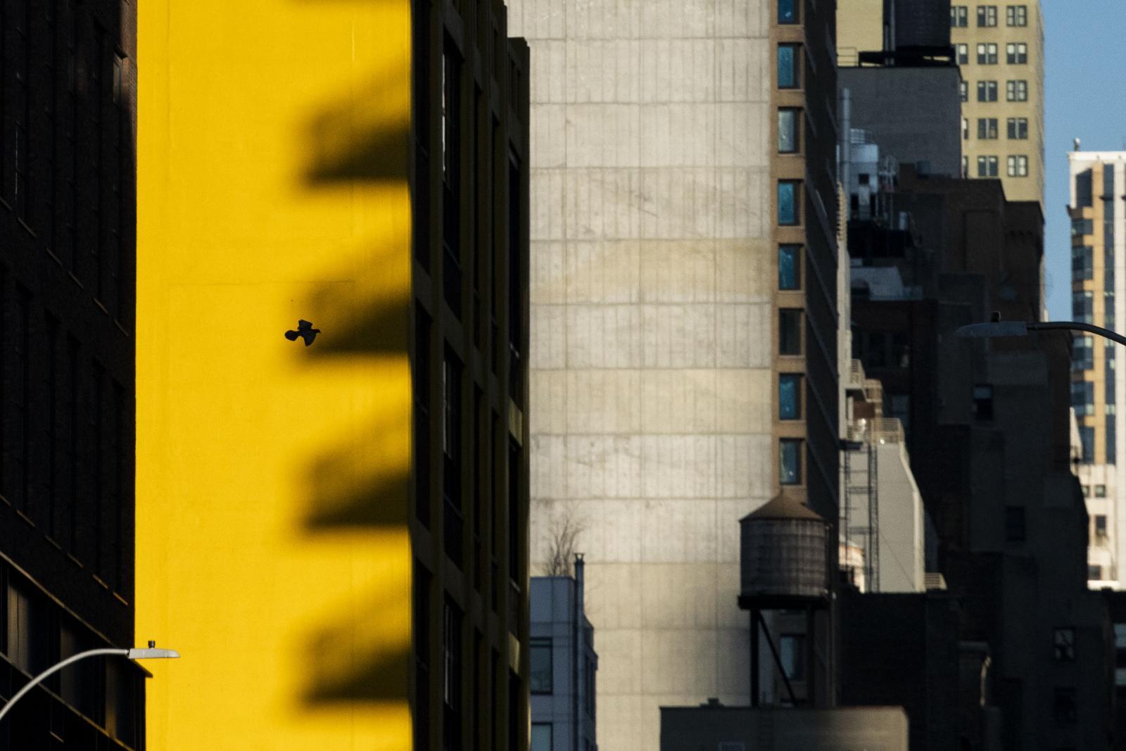 Photography image - Loading Lefevre_COVID19_03.JPG