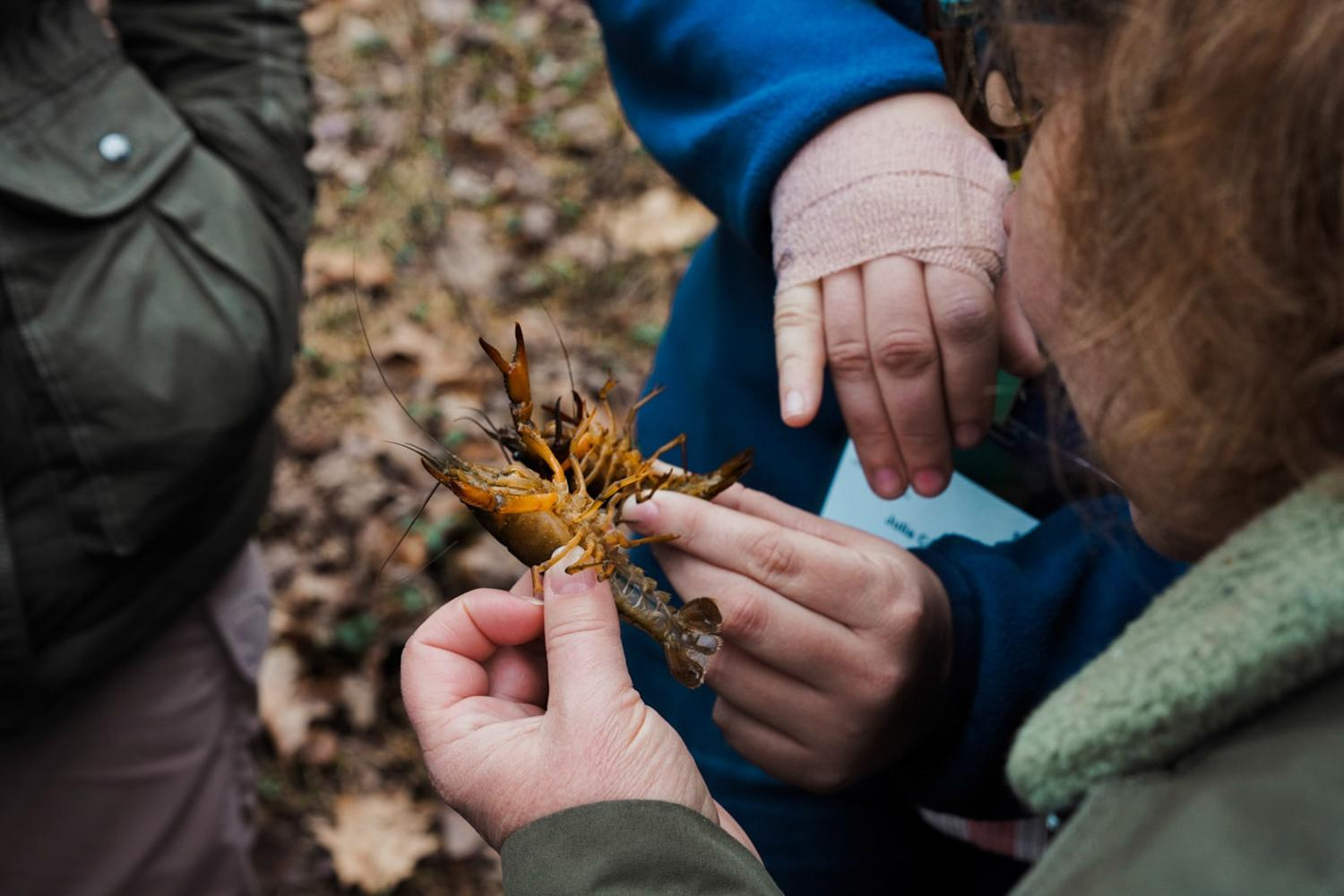 The VAEE group receives the opportunity to hold one of the crawfish that are native to the vernal pools at Sweet Briar, 2020.