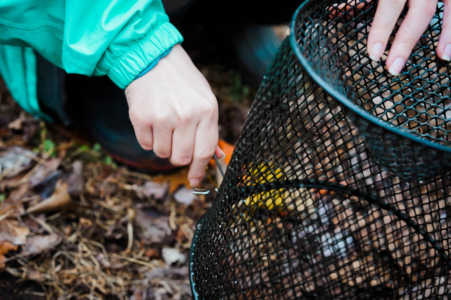 Teaching assistant and head of the student body biology group at Sweet Briar opens a cage that caught crawfish overnight to show the VAEE group as a teaching aid, 2020.