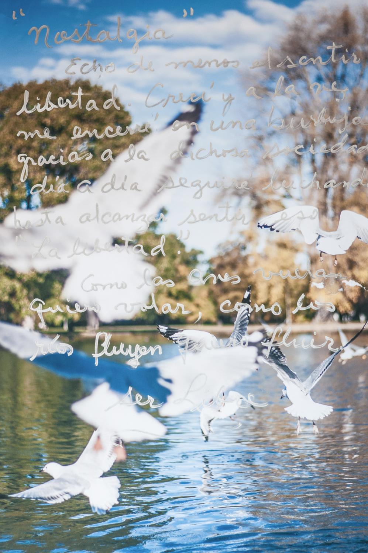 """""""Nostalgia. Echo de menos el sentir libertad. Crecí, y a la vez me encerré en una burbuja gracias a la dichosa sociedad. Dia a dia seguire luchando hasta alcanzar sentir eso, La Libertad. Como las aves vuelan, quiero volar, como los ríos fluyen, quiero fluir. Libertad."""""""