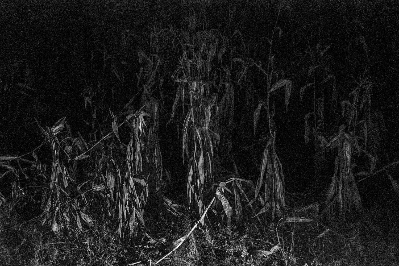 Al entrar a un campo de maíz, si se ven plantas con su tallo doblado es signo de la presencia de un espíritu y no se debe entrar ese día a la plantación, se arriesga encontrarse con un espíritu que no quiere ser visto.
