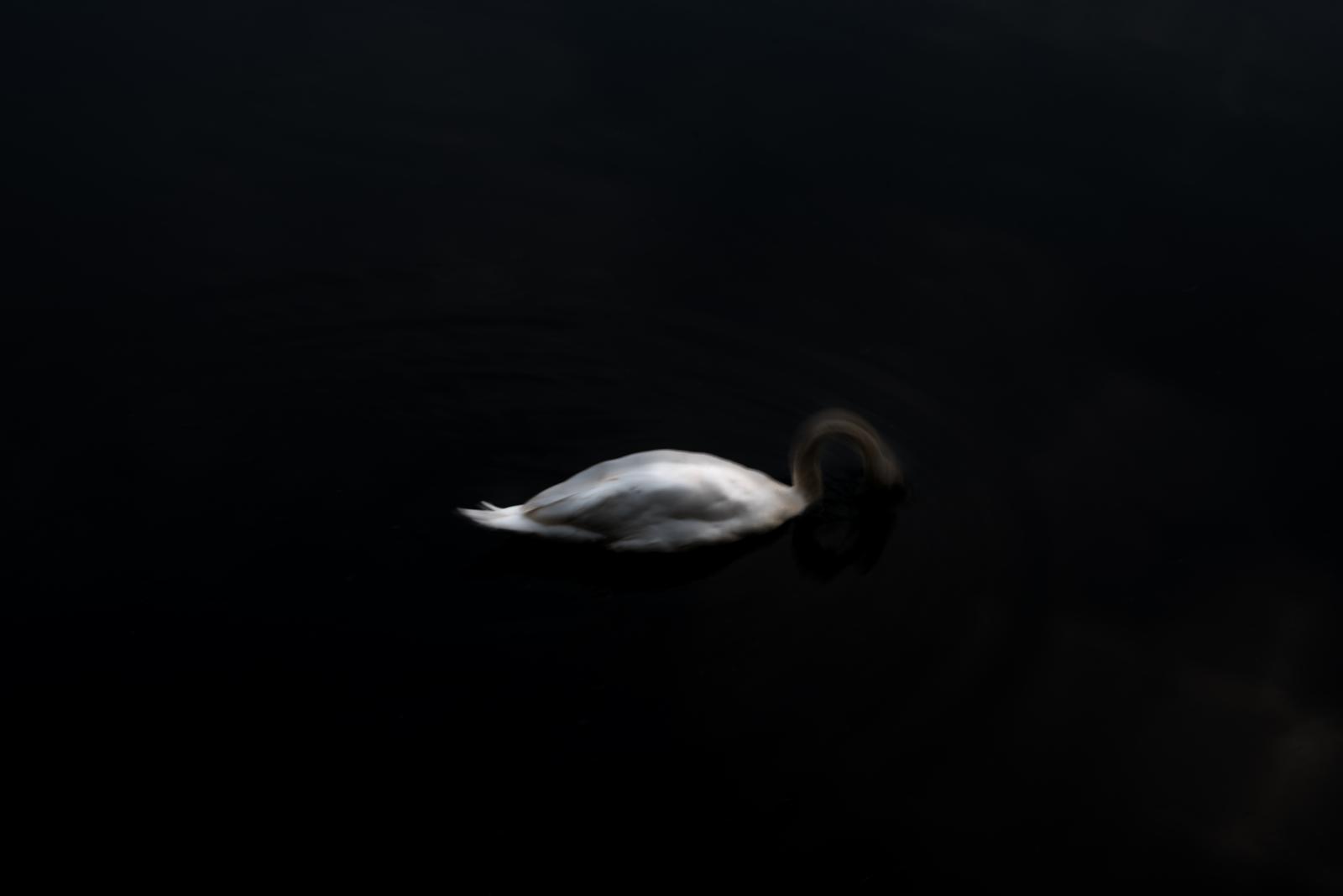 Photography image - Loading DSC_1016.jpg