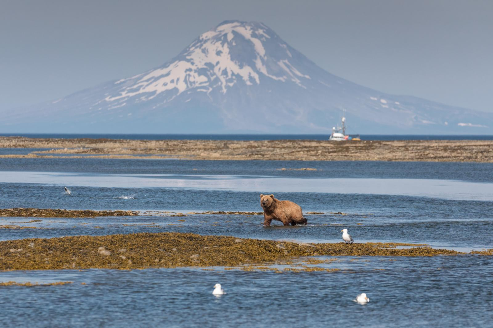Photography image - Loading AcaciaJohnson_AlaskaBearsPebbleMine_13.jpg