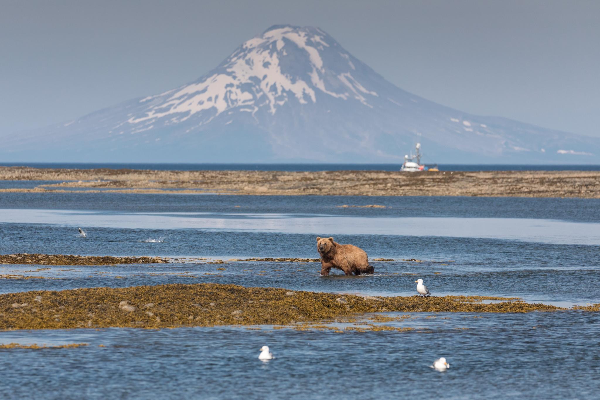 Art and Documentary Photography - Loading AcaciaJohnson_AlaskaBearsPebbleMine_13.jpg