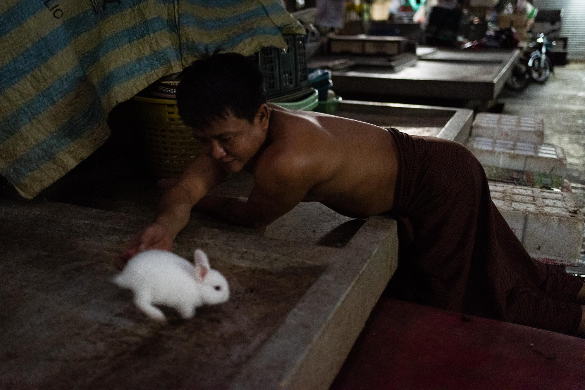 BANGKOK, THAILAND – NOVEMBER 29, 2018: A Burmese worker playing with his pet rabbit after work in the Old Market of Yaowarat. As they live cramped apartments, small pets, such as rabbits, hamsters, goldfish, are popular among Burmese workers.