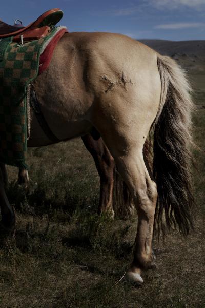I pastori nomadi marchiano a fuoco i propri cavalli per identitificarne il proprietario. (Mongolia Settentrionale. Mongolia, 2019) ©Simone Filpa