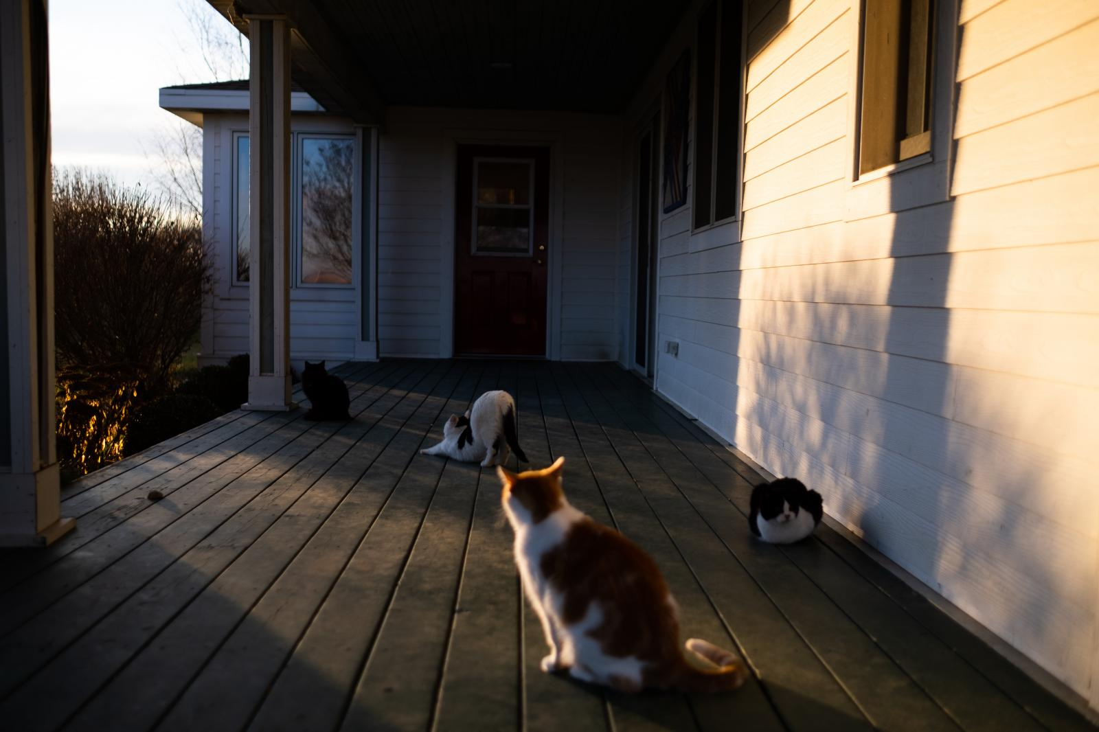 We have many barn cats on our farm. My parents (mostly my mom) take care of them and feed them twice a day.