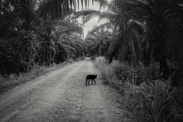 Indigenous Land Rights in Sarawak