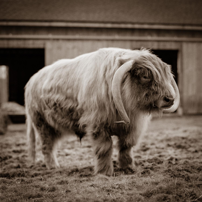 Grady, JP Farm Animal Sanctuary