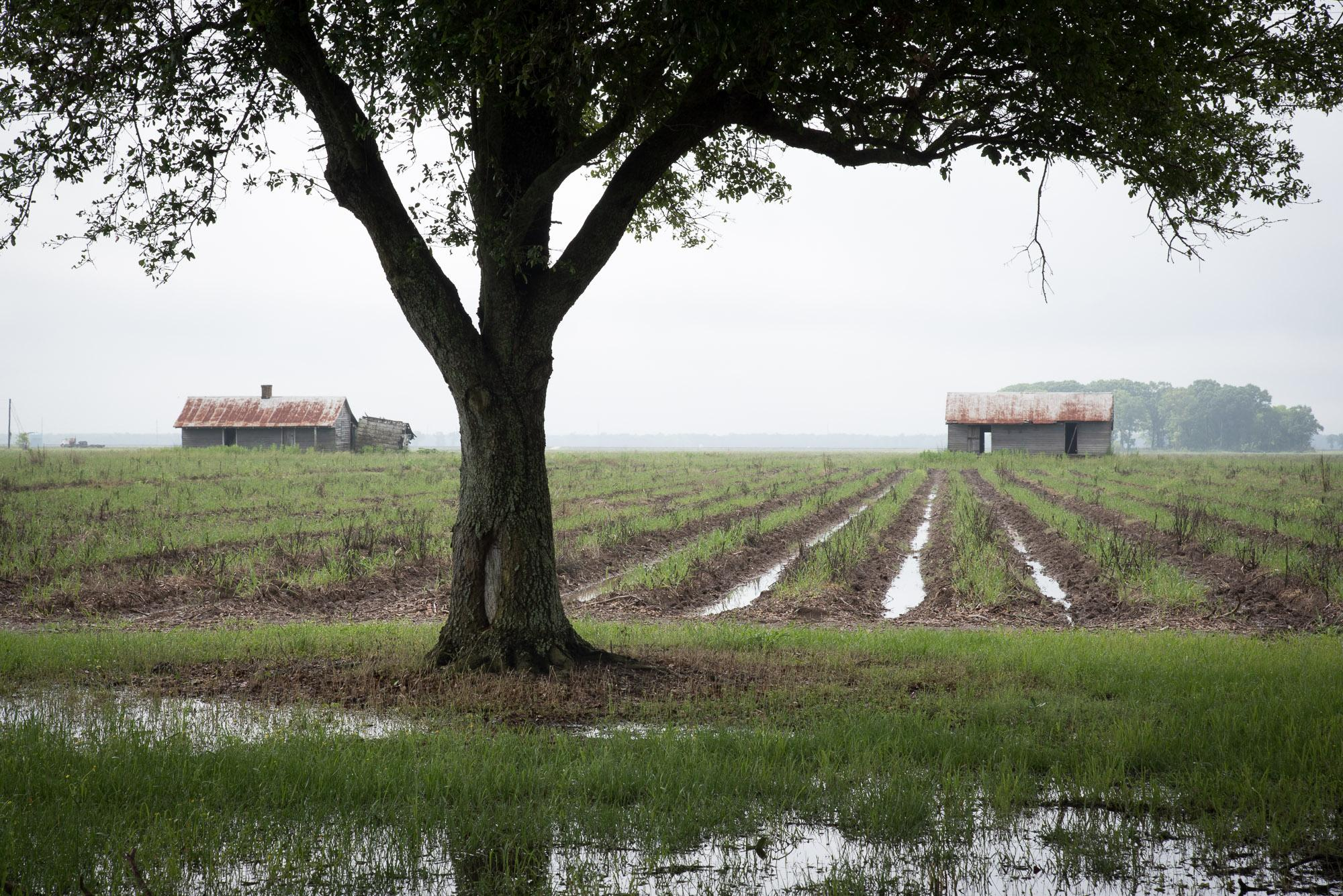 Slave Dwellings and Fields, St James Parish, Louisiana