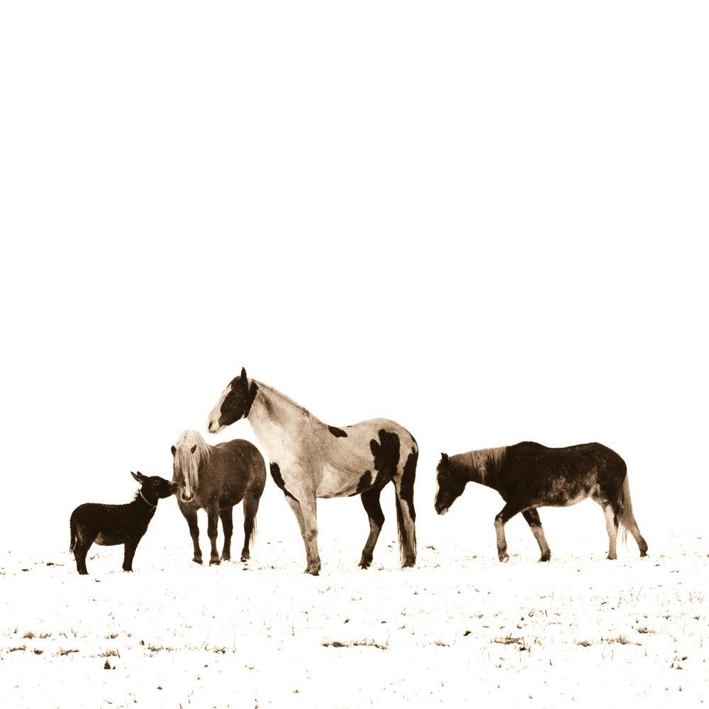 Pedro the Donkey and Horses