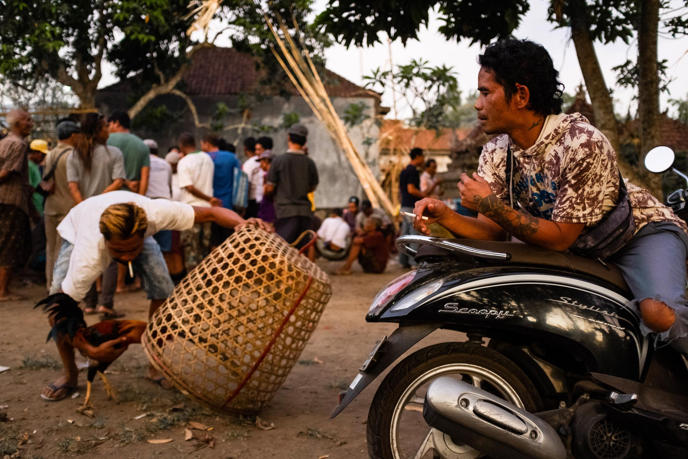 Layed down on the motorcycle seat, smoking a cigarette, a man observes a player taking a rooster from the wicker cage. All over the island at the side of the roads, cages can be seen with roosters inside. The breeders claim that it's for the animals to get used to movement and people.