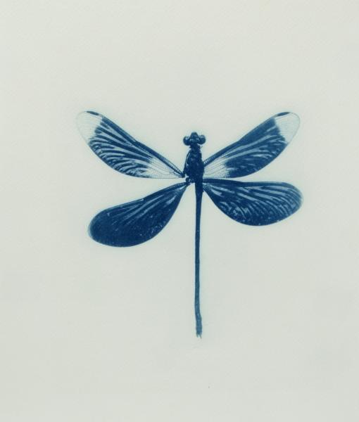 Azul Indigo - Cianotipos