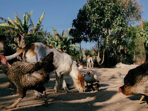 Pandemia no campo | Rural pandemic