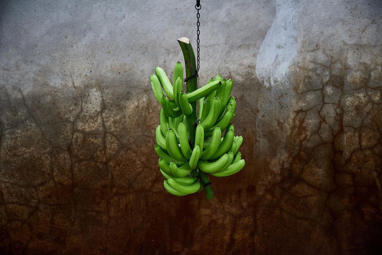 Photography image - Loading banano_00.jpg