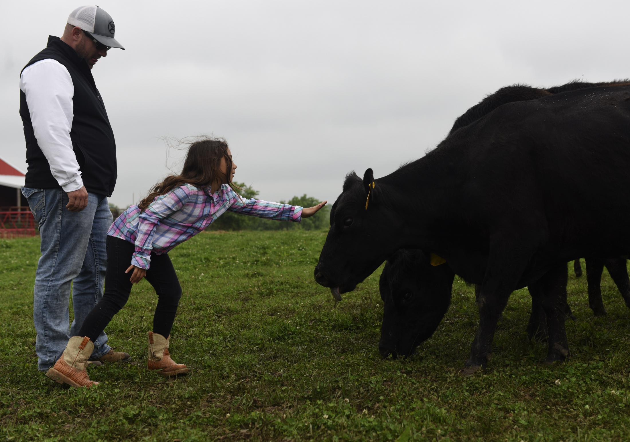 Fred Williams visits the cattle with his daughter Isabelle, 7, on Tuesday, May 19, 2020, on their farm in Clarksburg, Missouri. Williams said he grew up working on his grandparents farm and wanted to give his children the same opportunity to work on the land.