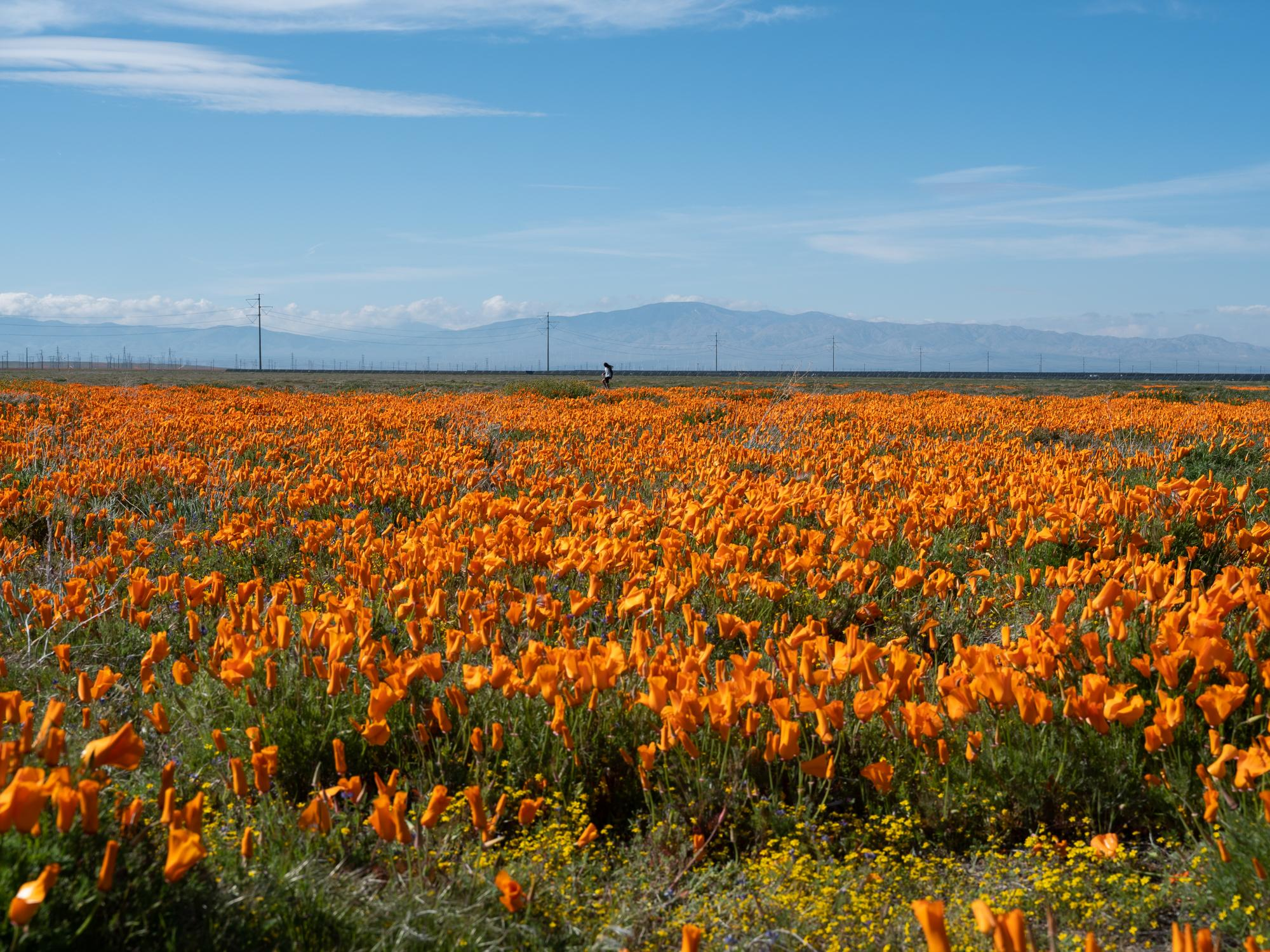 Antelope Valley, CA.