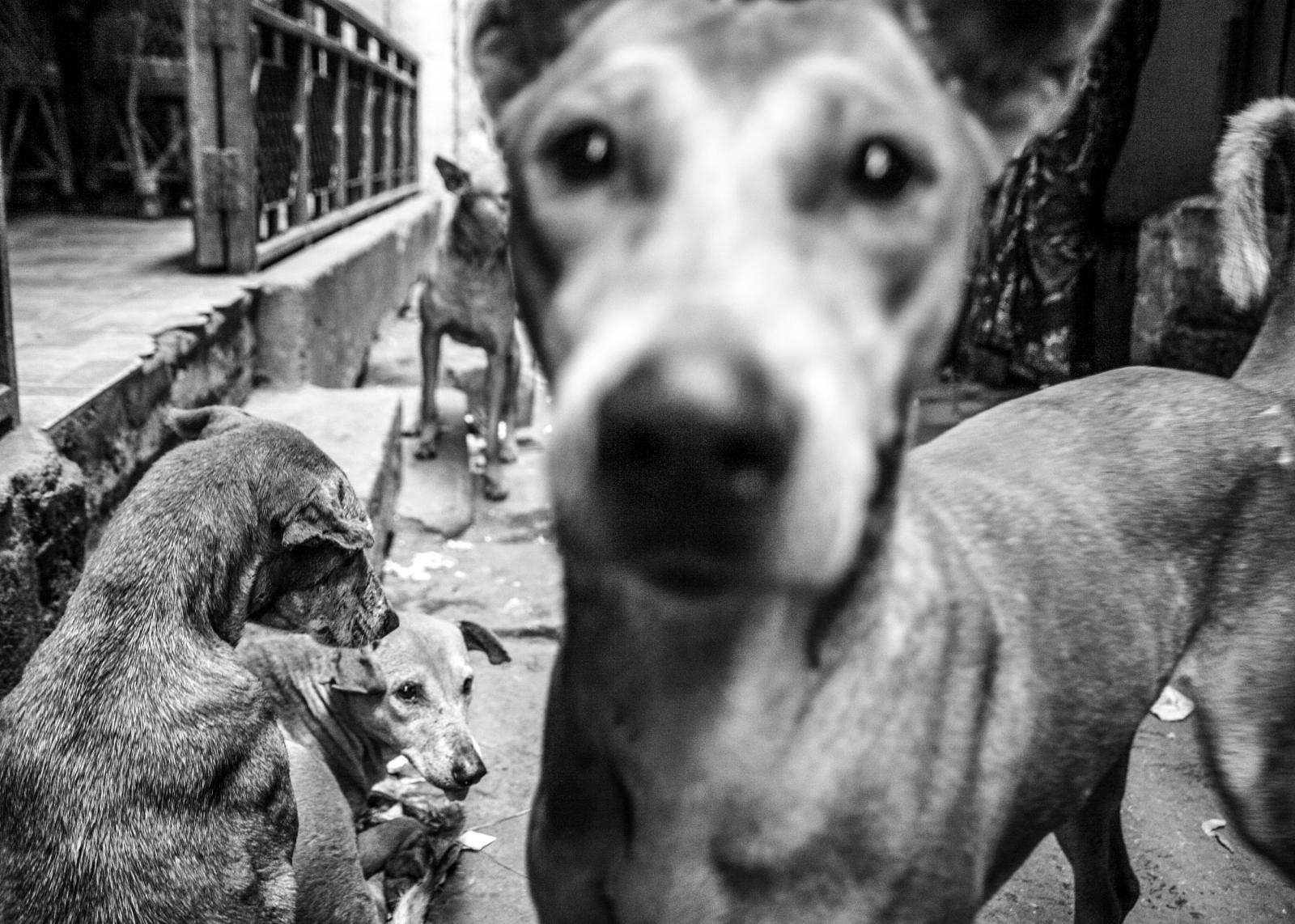 Photography image - Loading Animals_(74).jpg