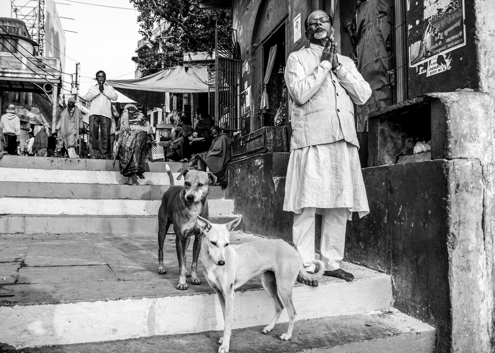 Photography image - Loading Animals_(96).jpg