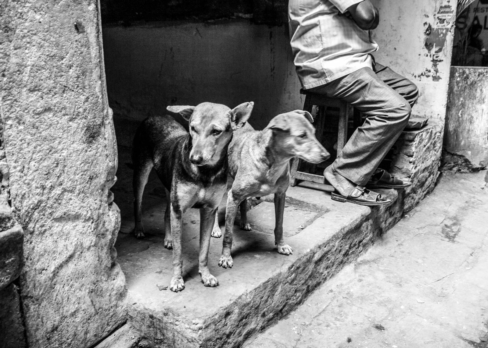 Photography image - Loading Animals_(104).jpg