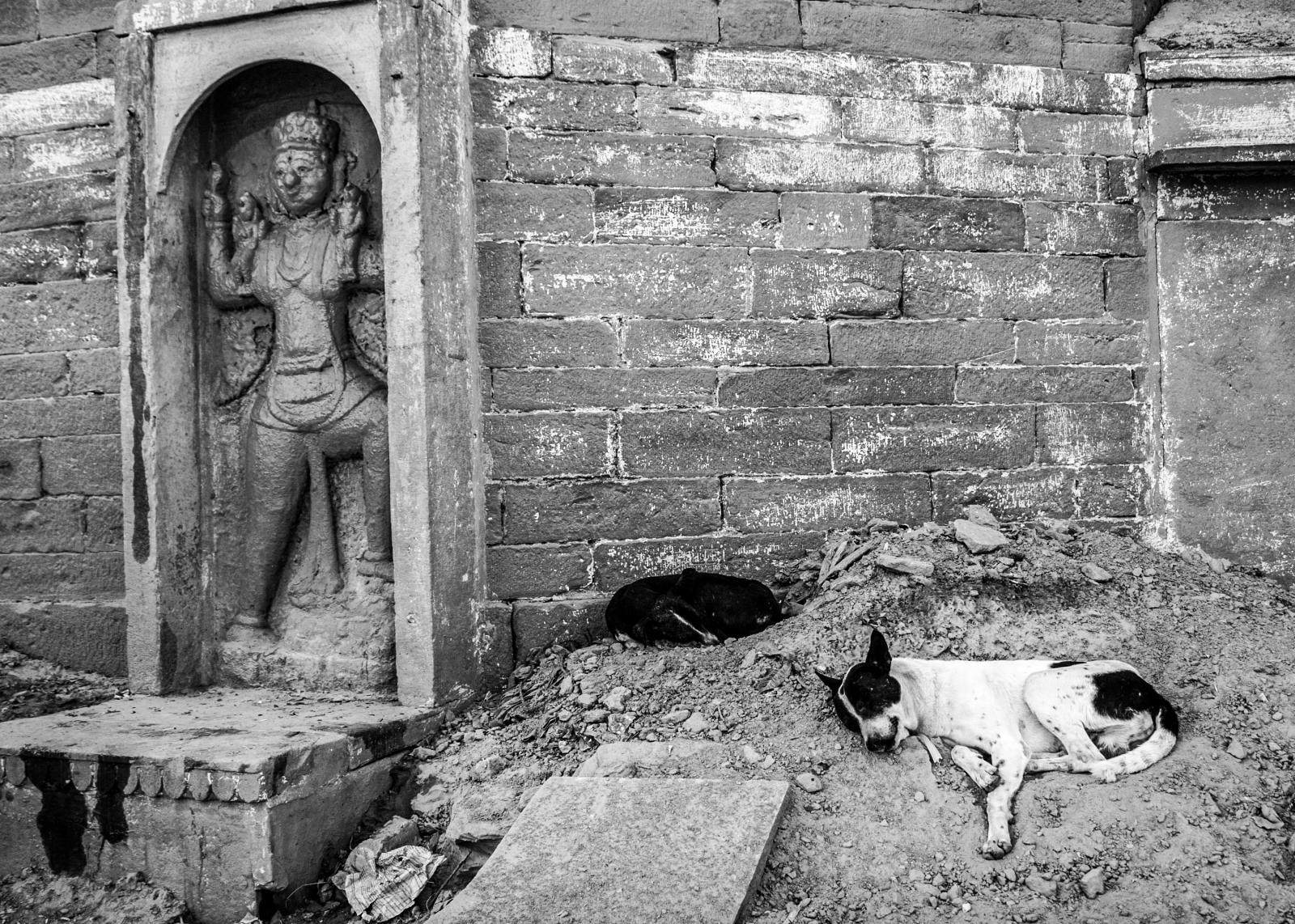 Photography image - Loading Animals_(97)-2.jpg
