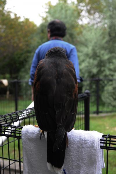 Tokyo Falconers