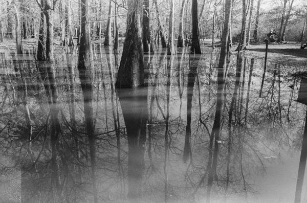 Perry, Mississippi, USA  A reflection of trees in flooded waters in Mississippi. Shot on 35mm film on a Pentax ME Super.
