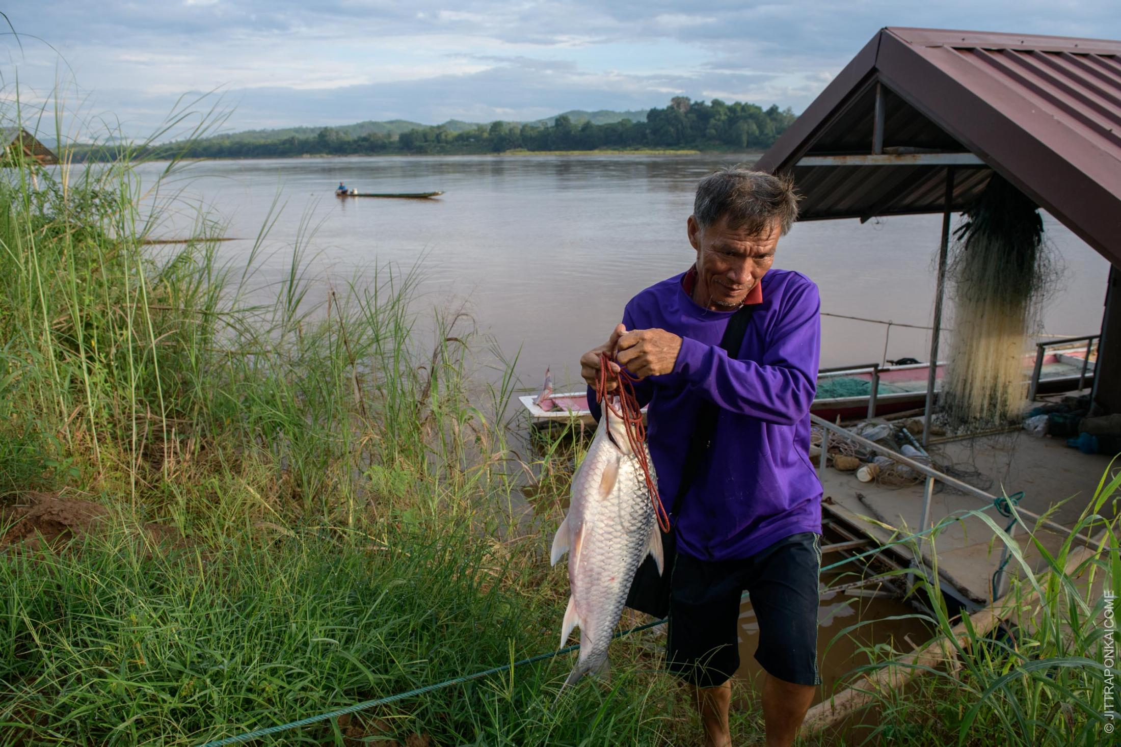 Somporn Kaewmala has caught a common silver barb, weighing 5 kilograms, which is a rare sight these days. As a 62 years old fisherman who resettled from Laos since he was 10, he has witnessed the economic downfall of the fisheries on the Mekong River firsthand. After the Xayaburi Dam was built, water levels dropped. The fish can't reproduce, and people can't farm along the river banks. This negatively affects incomes, so people have to find work as a construction worker or other manual labor. If they build the Sanakham Dam, there will be no fish left for the next generation. In Loei, Thailand – August 2020.
