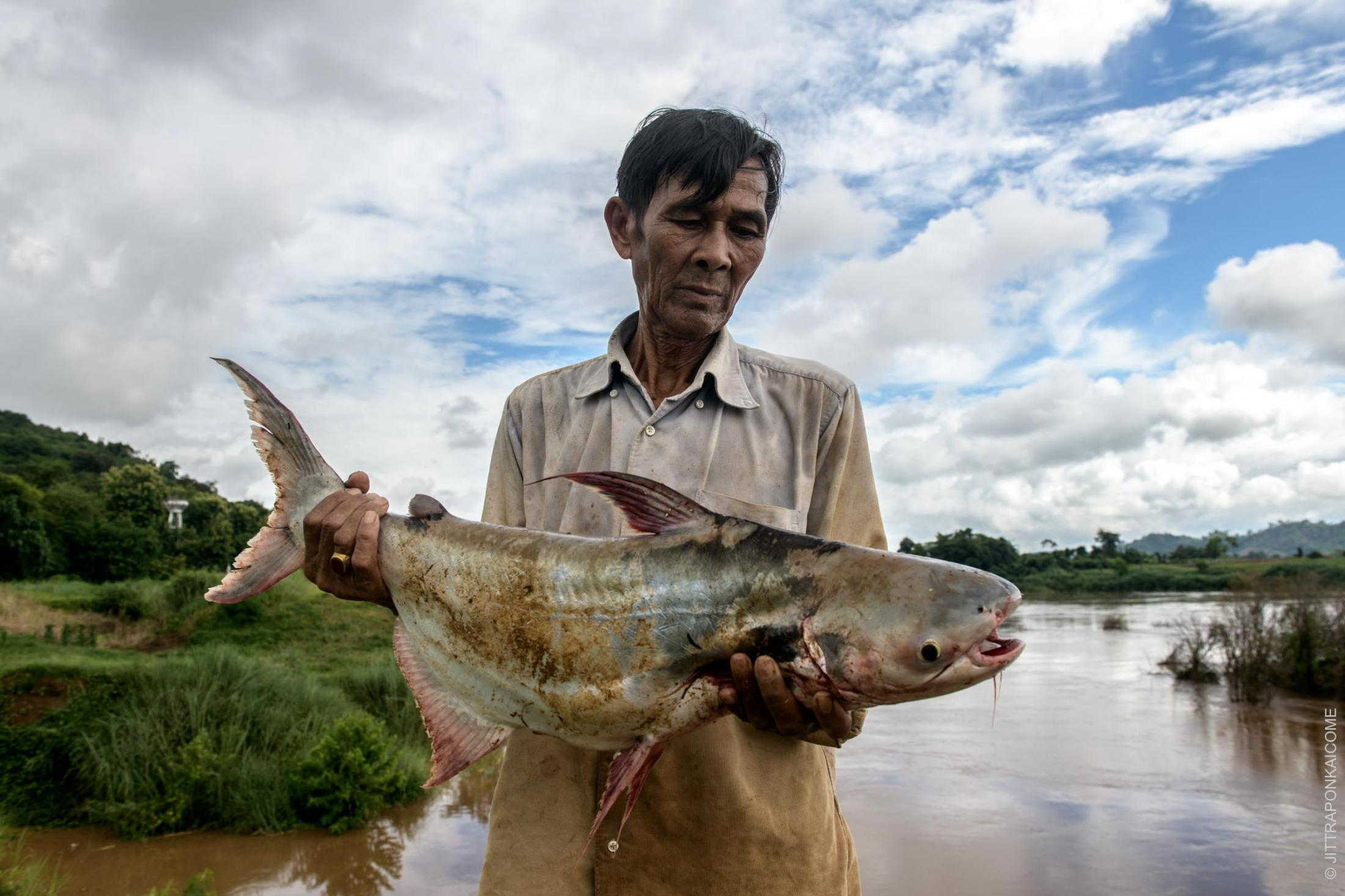 Supol Khamthong, a 67 years old fisherman, caught a black-eared catfish weighing 5 kilograms. As the riverine ecosystem of the Mekong River is affected by the many upstream dams, water levels are lower than usual, negatively influencing this specie's reproductive cycle. Suppose more dams are built in the Mekong basin, this fish could become endangered. In Nong Khai, Thailand – August 2020.