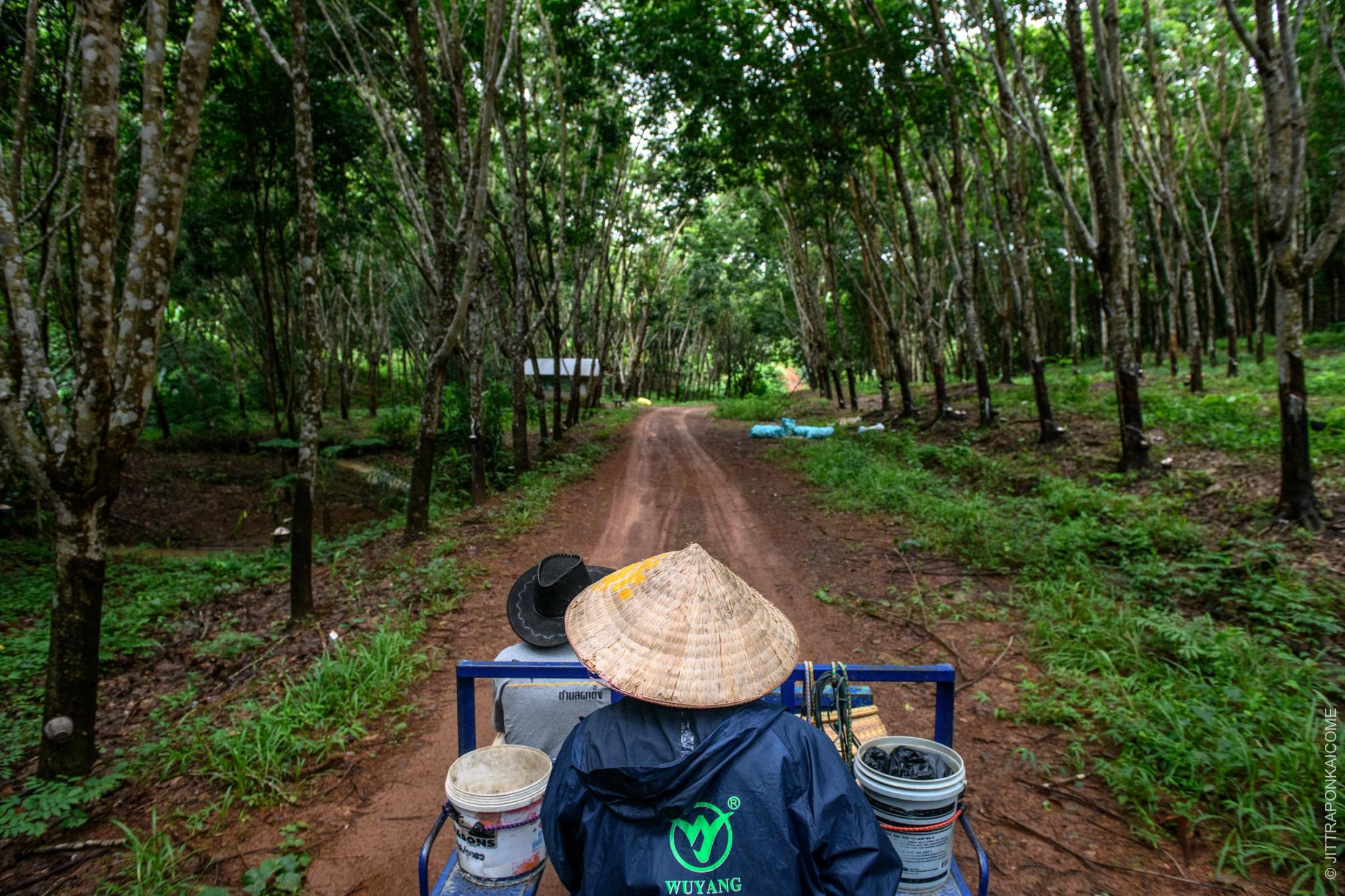Fishermen ride a truck to their new jobs at a rubber plantation, in order to supplement their income after being left unable to make a living from fishing. A reduction in the fish population, caused by upstream dams on the Mekong River, lies at the root of this problem. In Nong Khai, Thailand – August 2020.