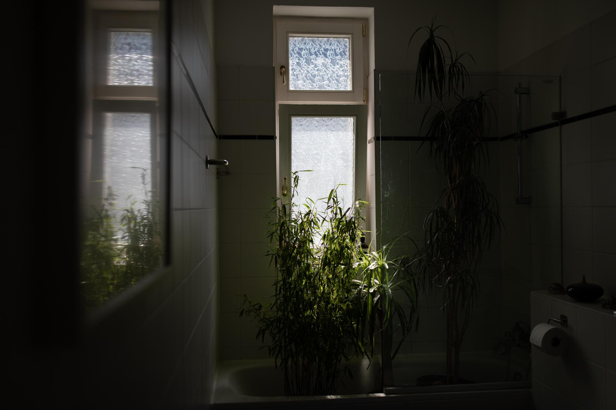DAY 38 of the first lockdown Rainforest feeling in my bathroom. Berlin, Germany, April 28, 2020.