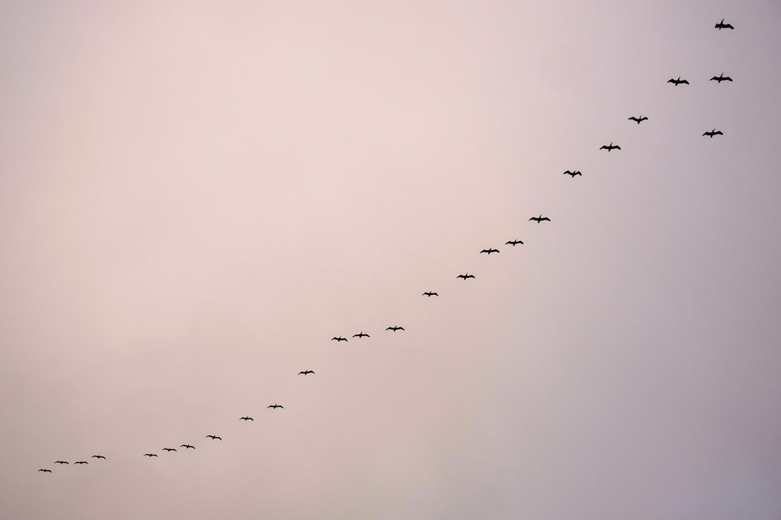 The flock.