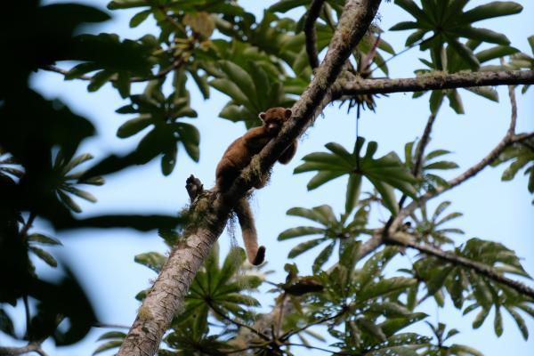 Bienvenidos a la Selva: Parque Nacional Cusuco