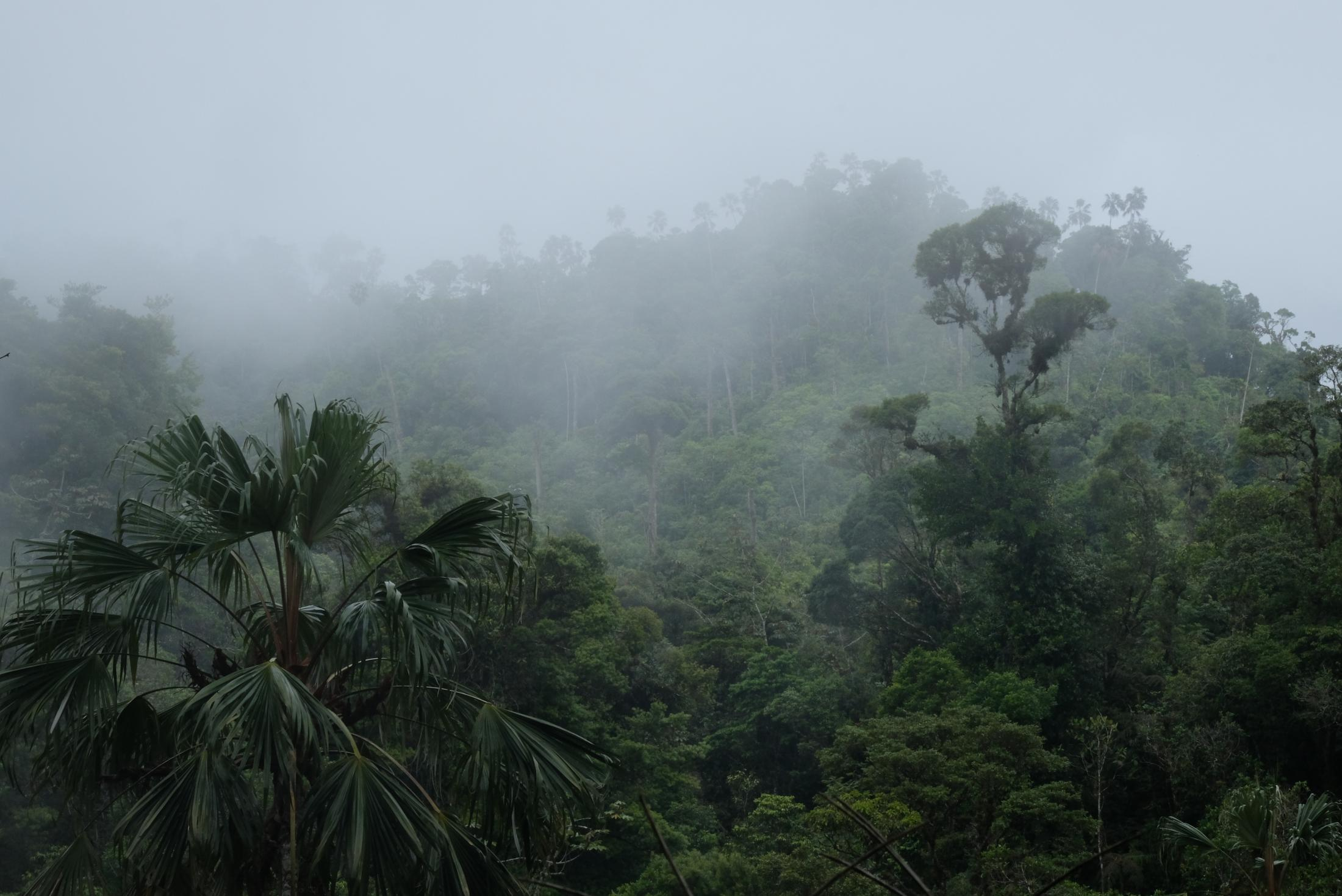 Tropical Mountain Cloud Forests boast high levels of endemism due to their microclimates and topographic heterogeneity. Incoming clouds provide a high proportion of the water used up in the forest. Epiphyte plants take charge of absorbing the water droplets and sharing it with their tree host.