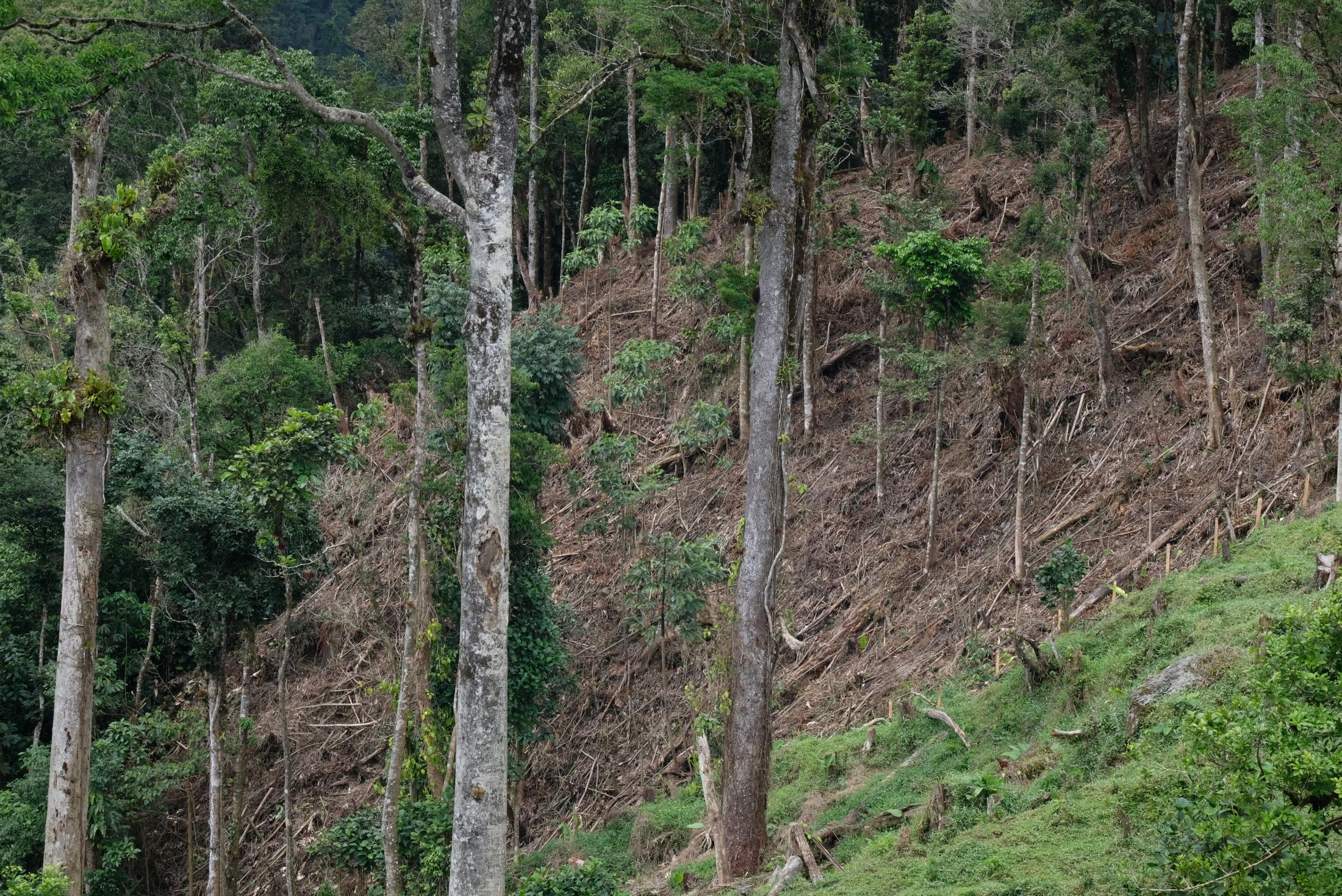Deforestation maximizes the effects of climate change because it decreases the surface area of the forest and exposes the core area to drier conditions and higher temperatures. Meaning that not only that part of the area is affected, but the whole forest.