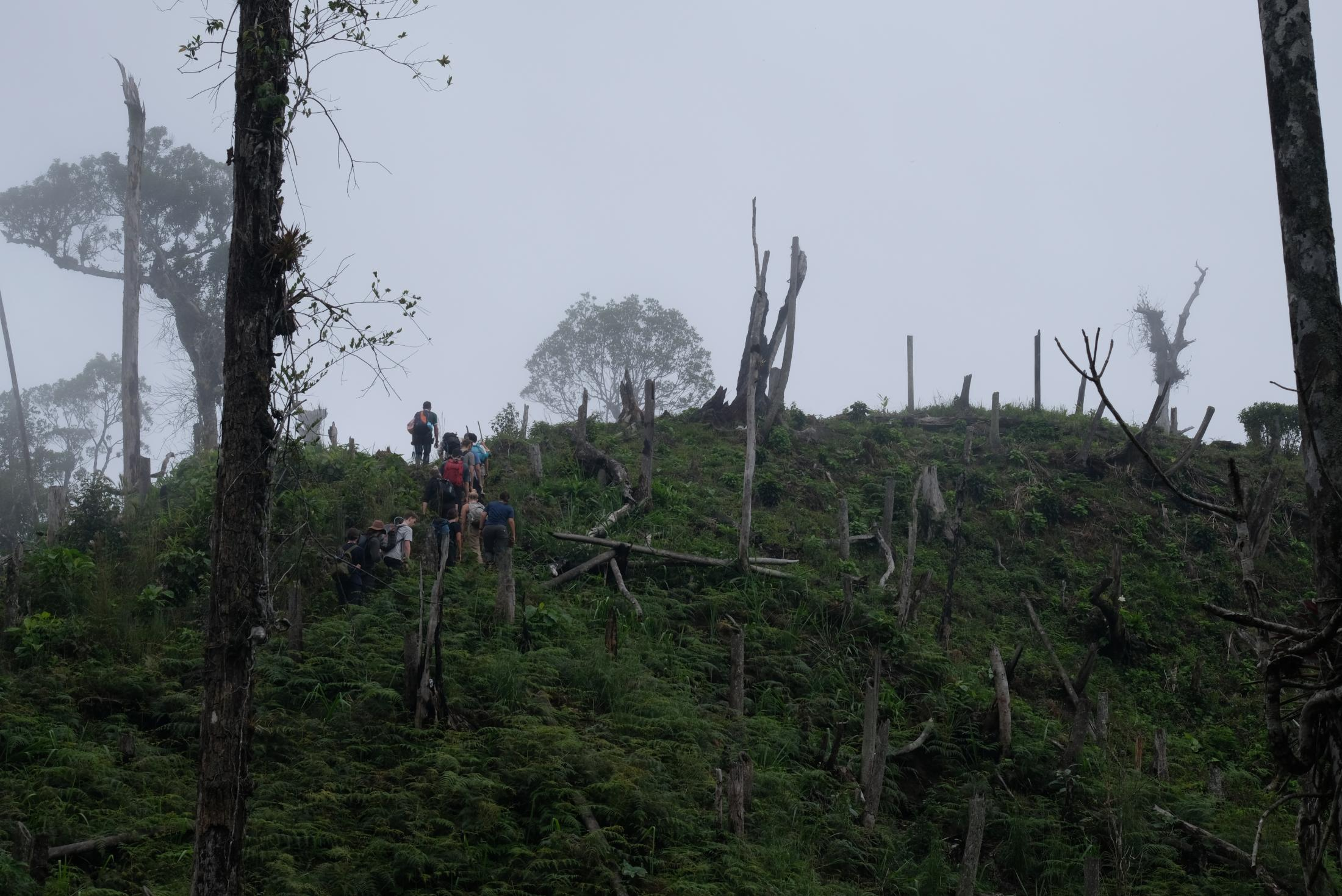 Newly deforested patches that are really close to the Core of the forest. It felt like walking on a graveyard.