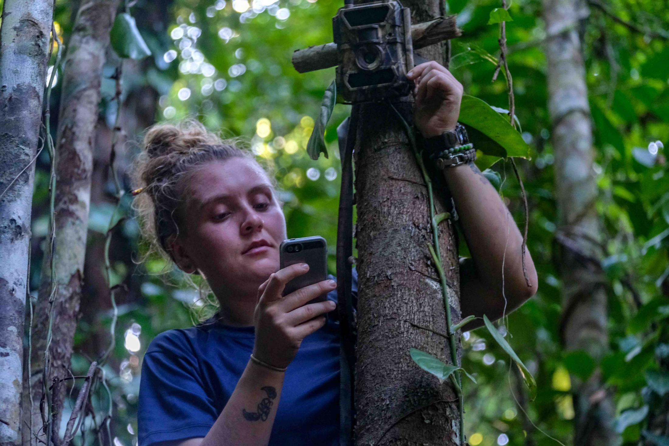 Conservation technology is increasingly being used to prevent illegal logging and hunting in real-time. At Osa Conservation, we installed several GSM cameras surrounding National Parks and the biological station. These cameras send a photo or video in real-time to a smartphone whenever somebody is detected passing by. In this way, it is possible to alert nearby ranger stations. The future of conservation is bright if we can effectively bring technology to process information more efficiently.