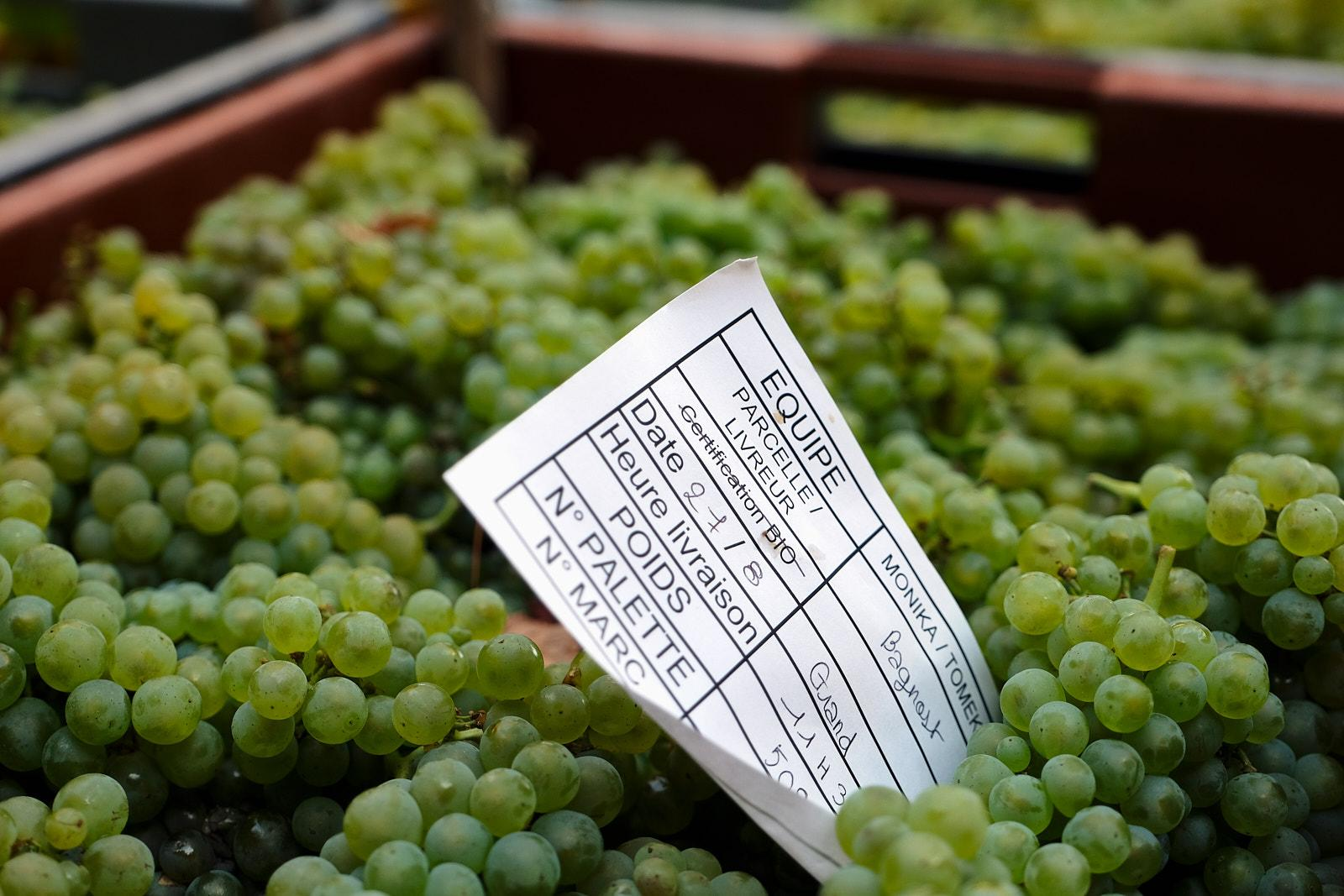 Picked grapes are tightly surveyed as time of harvest, team of pickers and many other criteria are displayed on each crate of grapes