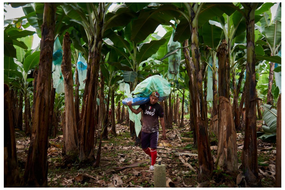 Photography image - Loading trabajadores_banano_00.jpg