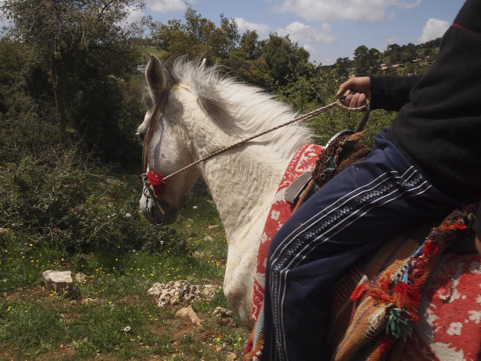 Jordan. Shefaa Hassan