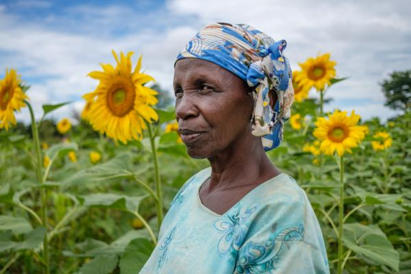 26,09,2020, Apac, Uganda -Ketty Okello, 64, farms in her sunflower field, which is one her main sources of income. In Uganda, post-harvest losses remain a constant challenge for the agricultural sector, though through initiatives by the Food and Agriculture Organisation of the United Nations (FAO) with local partners, farmers have seen a reduction in loss and better grain storage options.